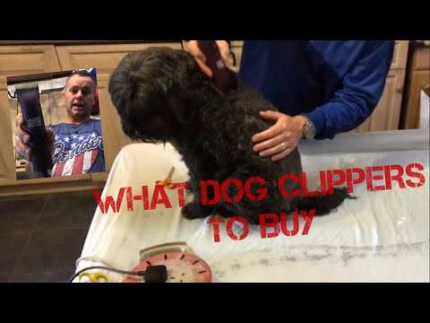 What Dog Clippers are The BEST, Review WAHL ANDIS ACG ALDI, Dog Groom