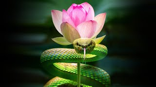 Inner Worlds, Outer Worlds - Part 3 - The Serpent and the Lotus