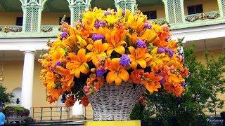XVIII Фестиваль цветов «Императорский букет». «Прекрасные виды - Волшебные цветы» (2018)