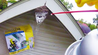 Removing Hornets Nest (DYI) on House | Boldface Hornet | Yellow Jacket Nest Removed Destroyed