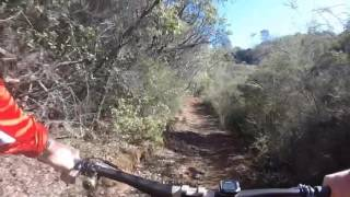 These are the downhill sections on the backside trails of Foresthill Divide.