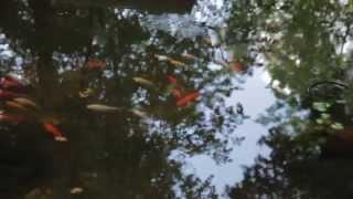preview picture of video 'LAZIO ETERNA SCOPERTA - Volume N3 - GENAZZANO'