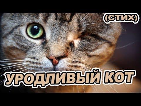 """Читаю вслух стихотворение """"Уродливый кот"""" строго не судите"""