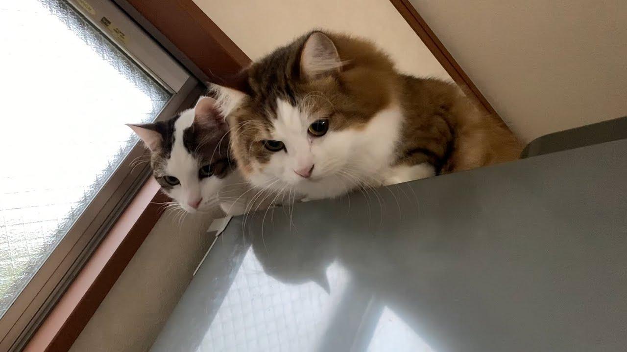 思ってたよりも足が長い猫
