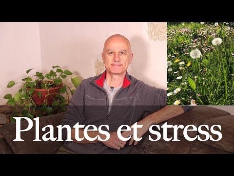 Ecoslim en herbolarios