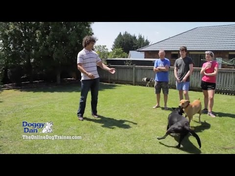 Welcome To The Online Dog Trainer