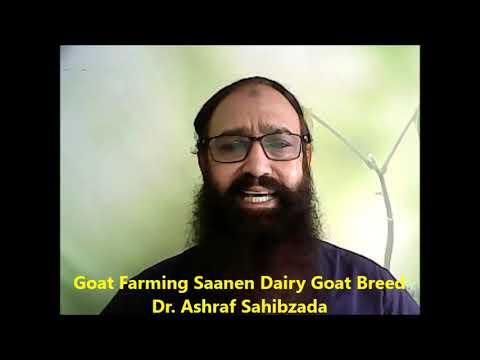 , title : 'Goat Farming Saanen Dairy Goat Breed Dr  Ashraf Sahibzada