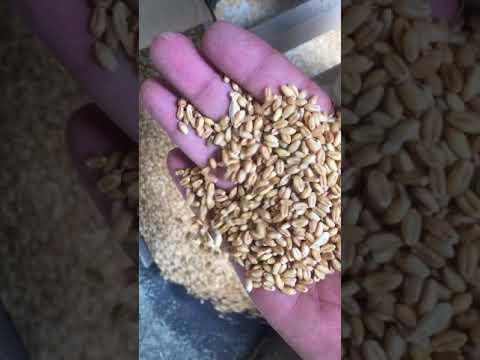 Grain Cleaner Cum Grader