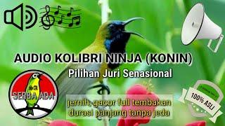 Masteran Jernih Kolibri Ninja (KONIN) Pilihan Juri Senasional Juara No.1 Gacor Full Tembakan #konin