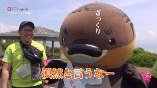 2019/07/29放送・知ったかぶりカイツブリにゅーす
