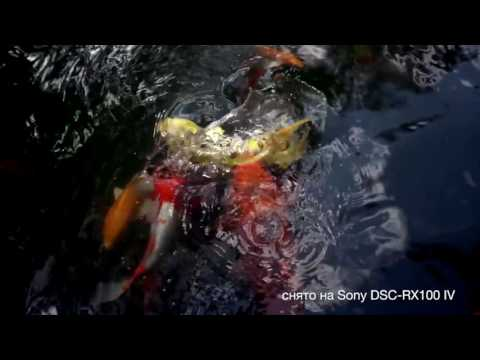 Фотоаппарат Sony DSC-RX100M4 видео 1