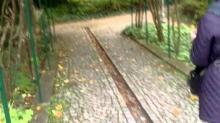 preview picture of video 'Baden bei Wien. Austrian Alps Park. Taxus baccata. Europäische Eibe.'