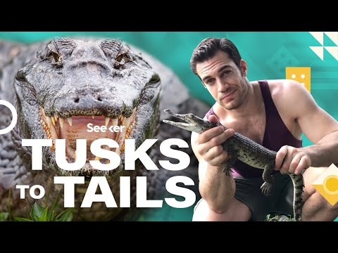 This Is What Makes Crocodile Jaws So Deadly