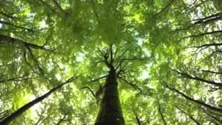 Issa Elle - La luz del bosque