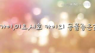 카이토  - (보컬로이드) - 런닝맨 미요 시호 가이 카이의 동물 종류
