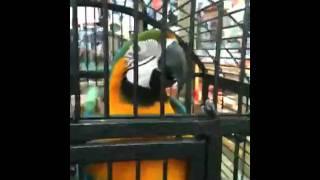 Dirty birdie