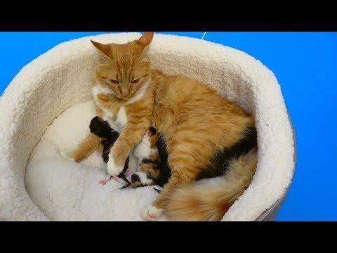 Cat baby Shower / Сколько котят родила КОШЕЧКА Мурка ? (видео)