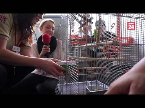 MOPO-Vogel kriegt einen neuen Freund