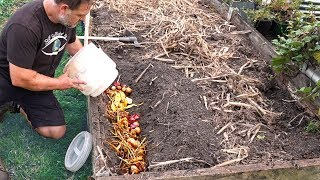 What Happens When You Bury Kitchen Scraps in the Garden?