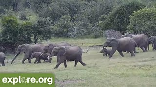 AMAZING! Elephants RUSH to the Water and PROTECT BABY