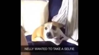 Собака любит селфи