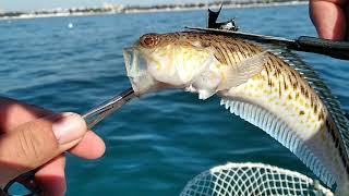 Рыбалка на черное море что и как снимали