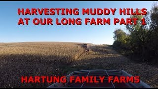 Harvesting Muddy Hills at Our Long Farm Part 1