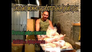How much can you earn on broilers in 50 days!!! Кобб500vsАрбор have acres. Conversion.