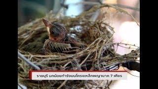 นกน้อย ทำรังบนโครงเหล็กพญานาค 7 เศียร แถมให้โชคถูกหวยหลายงวด : Matichon TV