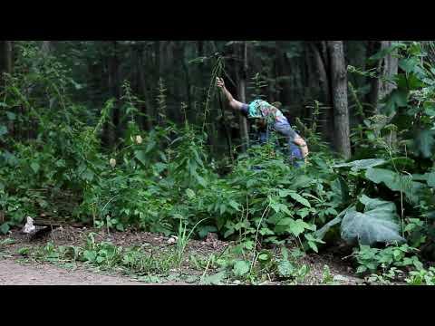 Креативный ролик о правилах безопасности в лесу