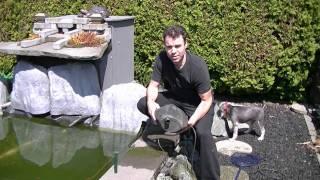 Pond maintenance - Spring start up
