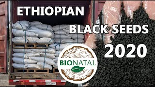 Receiving black seeds from Ethiopia