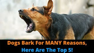 The 5 Types Of Barking! How Many Types Of Barking Does Your Dog Do?