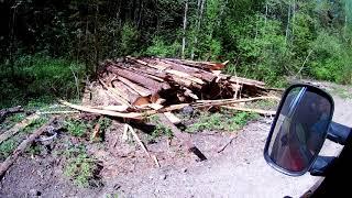 Полная бесхозяйственность и безответственность в лесах