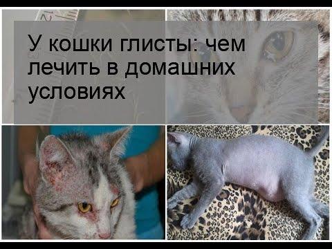 У кошки глисты: чем лечить в домашних условиях