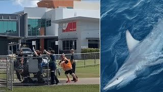 video: Video: Man critically injured in Australia shark attack
