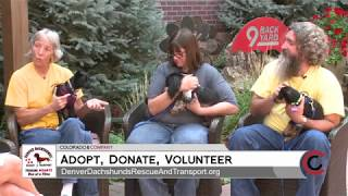 Denver Dachshund Rescue and Transport - July 23, 2018