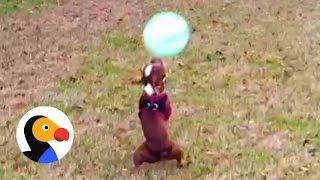 Amazing pup