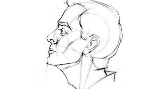 How to Draw the Head - Side View