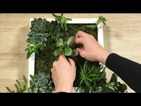Lantibiotique contre le microorganisme végétal des ongles sur les pieds