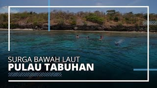 Pulau Menjangan dan Tabuhan, Tempat Menikmati Surga Bawah Laut di Antara Bali dan Banyuwangi