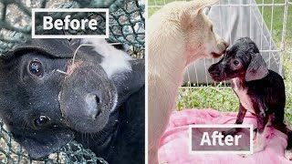 A Dog Whose Mouth Had Been Taped Shut After He Was Abandoned Gets A Second Chance At Life