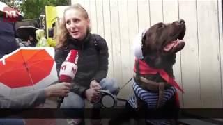 В Москве состоялся первый парад собак
