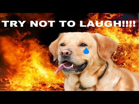 YOU LAUGH = Your DOG goes to hell !!! ( ANIMAL EDITION)