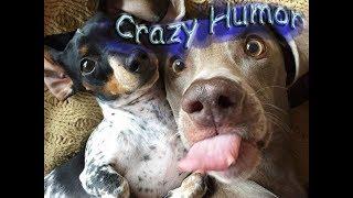 Смешные приколы про животных 2018 Лучший Crazy Humor