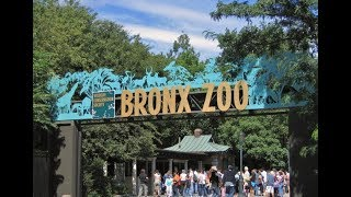 Full Tour Bronx Zoo | Fun Time | Top Zoo in New York  | #ExploreWithKirti