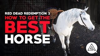 Red Dead Redemption 2 | How to Get the Best Horse