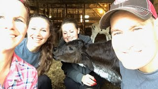 Some tips for raising a baby calf...