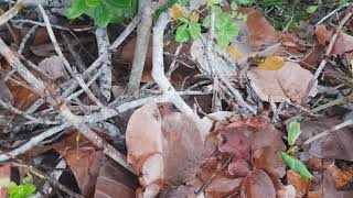 preview picture of video 'Снова крабики, на этот раз дневные  и маленькие :-)'