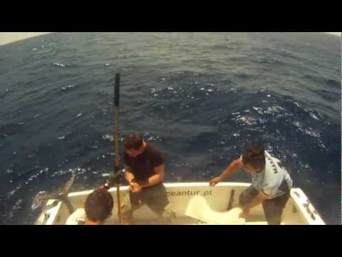 Tuna fishing in Azores